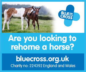 Blue Cross 2020 B (West Yorkshire Horse)